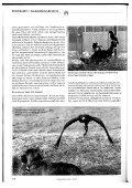 Beizjagd mit Harris Hawk und Teckel - vom Wolbecker Forst - Page 3