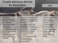 Projekt Welcome-Betrieb für Mastkälber - Home :: VET - Kälberpraxis