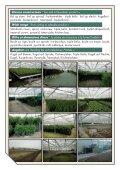 TREE TRUNCK TOPIARY bvba - Galle - Page 2