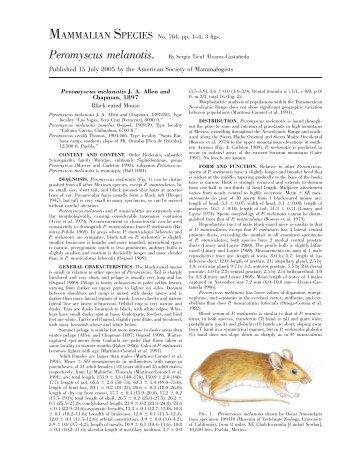 Peromyscus melanotis - Clark Science Center