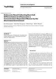 Embryonic Renal Collecting Duct Cell Differentiation Is Influenced in ...