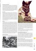 De Duitse Herdershond - Vdh - Page 7
