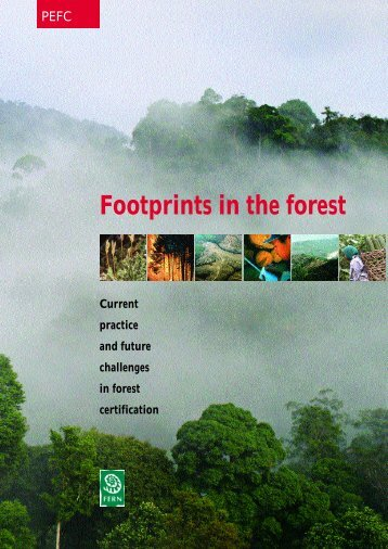 Footprints in the forest - Fern