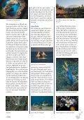 aucherparadies mit Kehrseite - Tauchclub Triton - Bad Vilbel eV - Seite 3