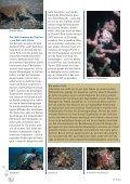 aucherparadies mit Kehrseite - Tauchclub Triton - Bad Vilbel eV - Seite 4