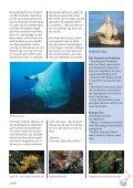 aucherparadies mit Kehrseite - Tauchclub Triton - Bad Vilbel eV - Seite 5