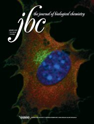 american society for biochemistry and molecular biology - Journal of ...