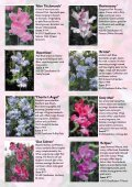 View - Somerset Sweet Peas - Page 7