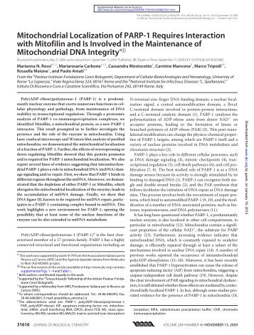 Mitochondrial Localization of PARP-1 Requires Interaction with ...