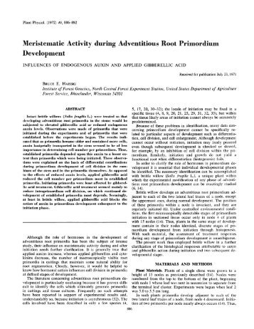 Meristematic Activity, during Adventitious Root ... - Plant Physiology