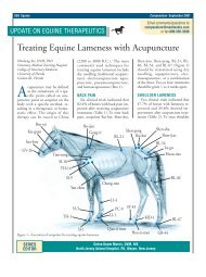 Treating Equine Lameness with Acupuncture - VetLearn.com