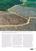 Papiergigant APP expandiert weiter - Robin Wood - Seite 2
