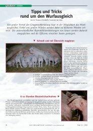 """Die """"richtigen"""" Ferkel versetzen - Traunkreis Vet Clinic"""