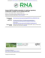 Human SAP18 mediates assembly of a splicing regulatory ... - RNA
