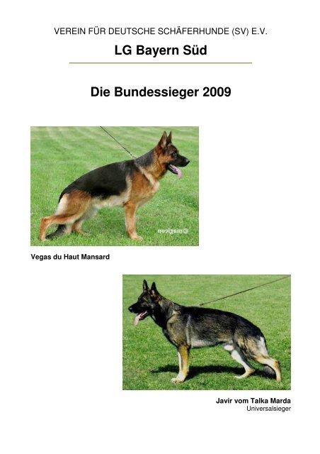 Schaferhund Welpen Mit Geradem Rucken Ddr Linie Emstek Deutscher Schaferhund Deine Tierwelt De