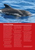 Small Type Whaling - Whale and Dolphin Conservation Society - Page 3