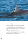 Small Type Whaling - Whale and Dolphin Conservation Society - Page 4