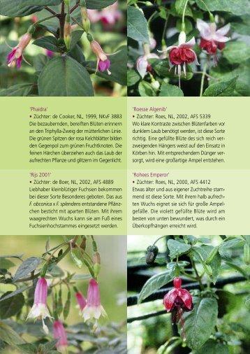 Auszug aus dem Buch - Deutsche Fuchsien