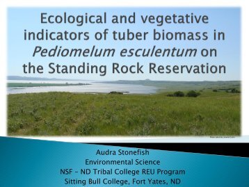 Ecological and vegetative indicators of tuber biomass in ...