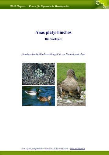 Anas platyrhinchos Die Stockente - Provings.Info