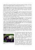 GRIDO DI RISVEGLIO - Freie Volksmission Krefeld - Page 2