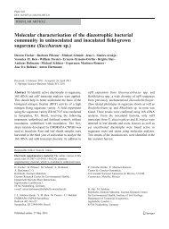 Molecular characterisation of the diazotrophic ... - bashanfoundation
