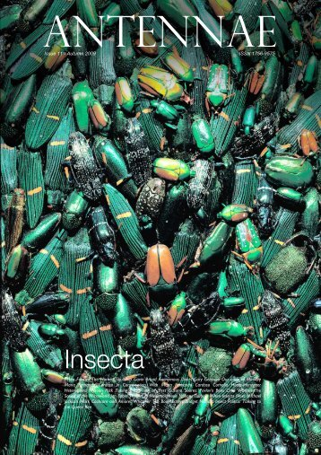 Insecta - Antennae The Journal of Nature in Visual Culture