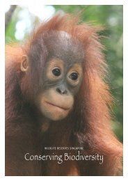 Conserving Biodiversity - Wildlife Reserves Singapore