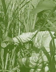 Bioetanol-Referencias-Inglês.ind272 272 11/11/2008 16:21:12
