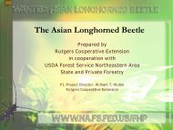 Asian Longhorned Beetles - Presentation - City of Worcester