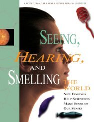 Seeing, Hearing, and Smelling the World - Howard Hughes Medical ...