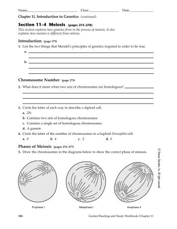 Section 11 4 Meiosis Worksheet Answers