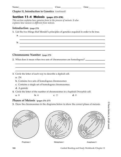 Section 11–4 Meiosis (pages 275–278)