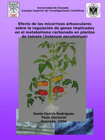 Efecto de las micorrizas arbusculares sobre la regulación de genes ...