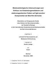 Molekularbiologische Untersuchungen zum Einfluss - Ruhr ...