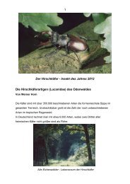 Die Hirschkäferartigen (Lucanidae) - Naturschutzzentrum Odenwald
