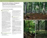 Übersicht der wichtigsten Waldgesell- schaften des Ost-Erzgebirges