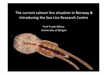 Salmon Louse