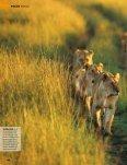 die Seele der Savanne - Gabriela Staebler, Wildlife-Photography - Seite 3