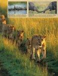 die Seele der Savanne - Gabriela Staebler, Wildlife-Photography - Seite 4