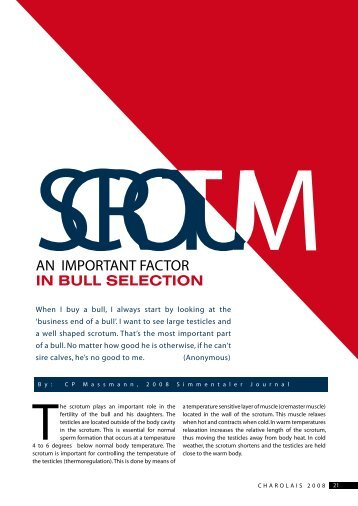 AN IMPORTANT FACTOR IN BULL SELECTION