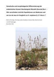Strandschmielen-Projekt 2010 - Arbeitsgruppe Bodenseeufer