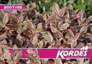 Katalog 2007/08 - Kordes-Jungpflanzen