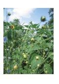 Urban Farming - IRAP - HSR - Seite 2