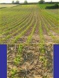 Bodenbearbeitung und CO2-Problematik - Land-Impulse - Seite 5