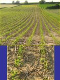 Minmalbodenbearbeitung- Krankheits - Land-Impulse - Seite 5