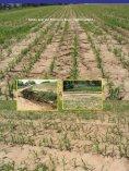 Minmalbodenbearbeitung- Krankheits - Land-Impulse - Seite 6