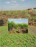 Minmalbodenbearbeitung- Krankheits - Land-Impulse - Seite 7