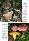 Seltene Boleten im Rhienland und in der Eifel - Seite 2