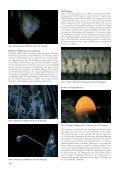 Download (pdf) - VdHK - Seite 6